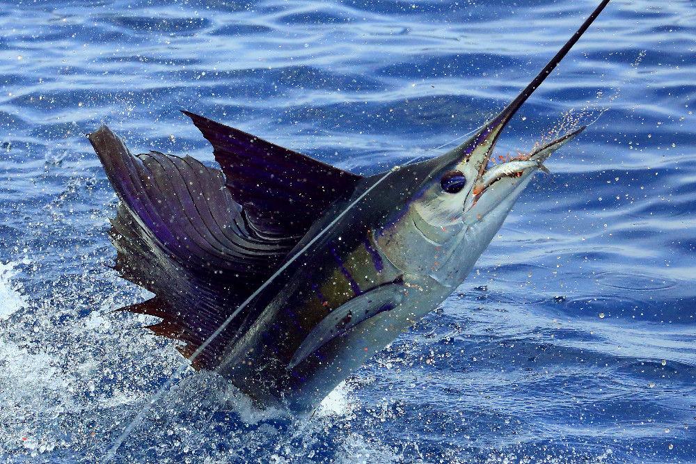 St. Lucia Billfish Tournament